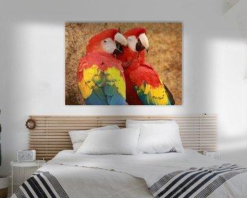 Loving parrot couple van Jelle Ursem