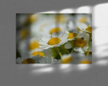 voorjaarsbloemen van Joke te Grotenhuis