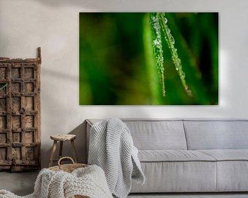 Bamboo met ijs van Ton de Koning