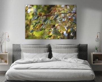 Herfst bladeren.  van jorrit Verduijn