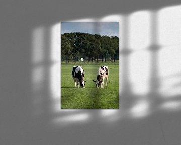 Koeien in de weide van Jehee Fotografie