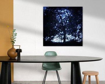 forrest for a tree 01 van poetic snapshots