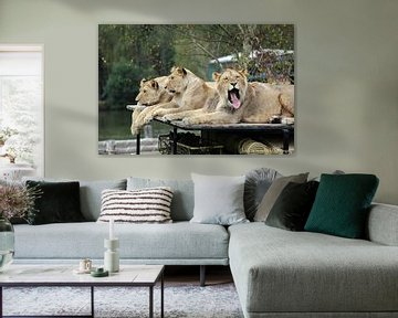Gapende leeuw van Guido Veenstra