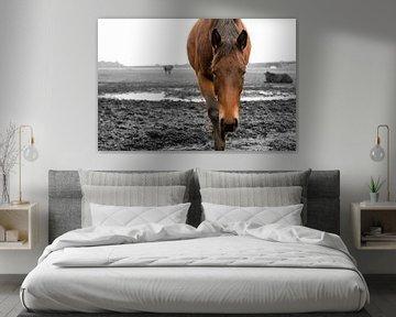 Paard in wei von Arjan Mak