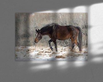 Veluwe, planken wambuis-wild paard 05  van Cilia Brandts