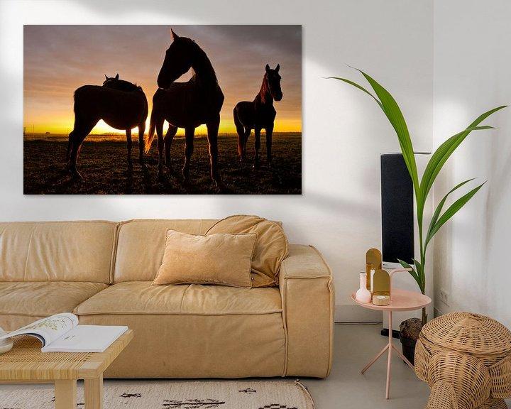 Sfeerimpressie: Horses van Anne Koop