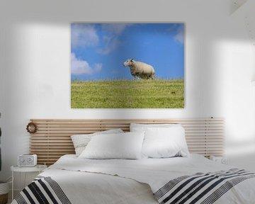 Schafe auf dem Deich von Terschelling von Jessica Berendsen