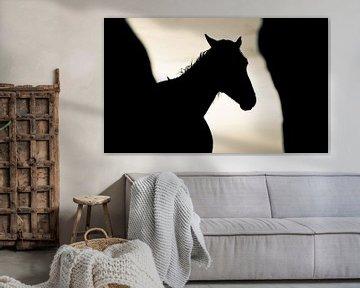 Horse von Anne Koop