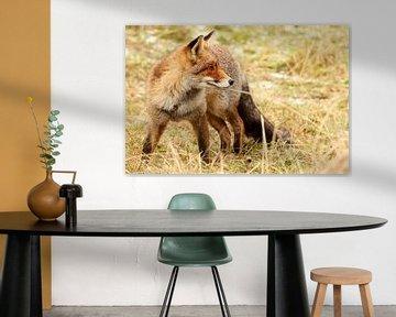 Rode vos kijkt achterom sur Paul Wendels