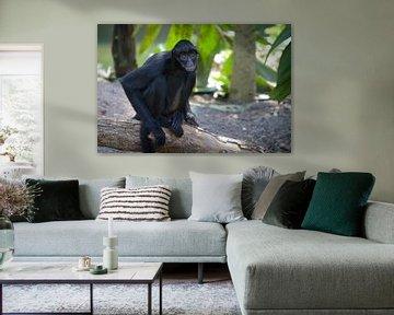 Zwarte spinaap zittend op een boomstronk met groene achtergrond von Malu de Jong
