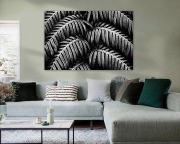 Tropische Varens Zwart Wit