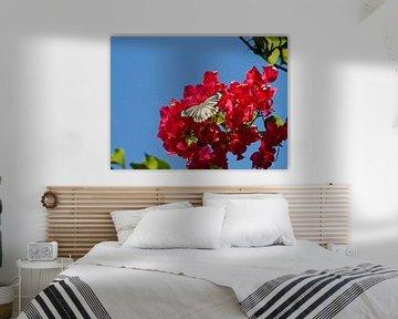 een vlinder fladderd boven een bloem von kees luiten