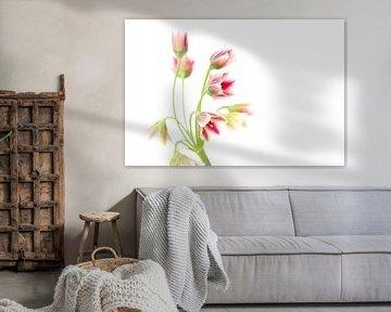 Roze bloem von Larka Louwe