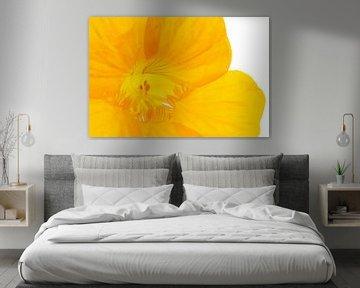 Close up into yellow flower van P Design