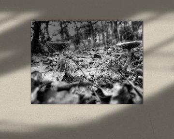 Paddenstoelen tussen de bladeren von Jasper Bloemsma