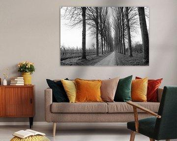 Zwart wit landschap Holland van Jurgen den Uijl