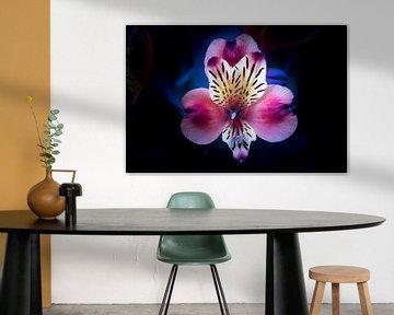 flower von Marieke Bakker