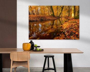 Leuvenumse beek in de herfst van Sjoerd van der Wal