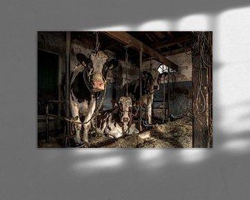 De koeien van boer Klein van Inge Jansen