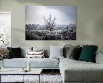 Winterse rijp van Vincent Snoek