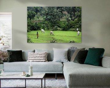 Platteland India van Cora Unk