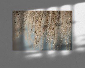 Waterval van regendruppels van Carla Mesken-Dijkhoff