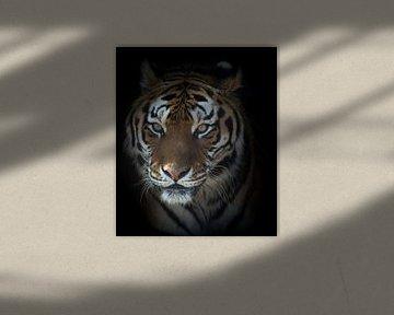 Porträt eines Tigers von Ellen van Schravendijk