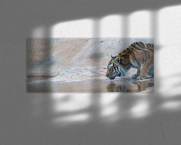 Drinkende tijger