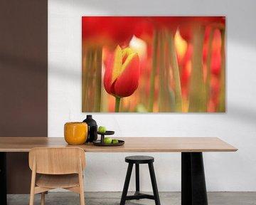 Small tulip van Marcel van Rijn