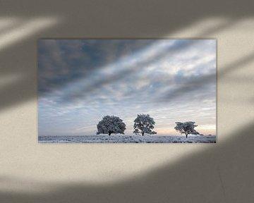 Koude winterochtend van Tony Ruiter