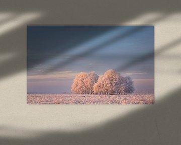 Winter in het Dwingelderveld sur Tony Ruiter