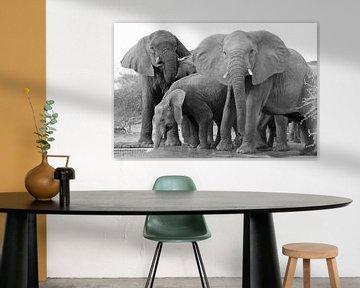 Dorstige wilde olifanten met matriarch von Ellen van Schravendijk