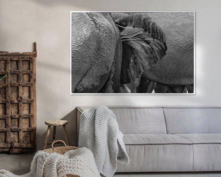 Sfeerimpressie: Olifantenoor van Ellen van Schravendijk