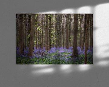 Kleurrijk bos van Mds foto
