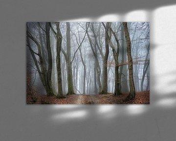 Geheimzinnig woud