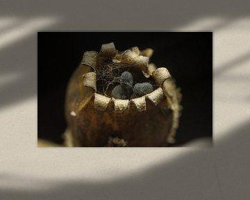 zaad doosje van koekoeksbloem van mick agterberg