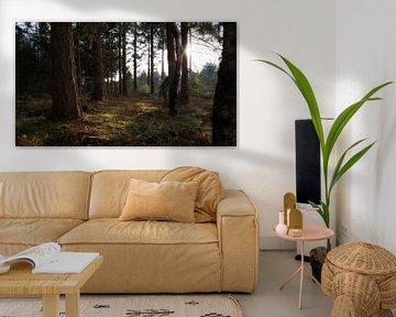 Bos in Overloon Noord-Brabant van Annemiek van Eeden