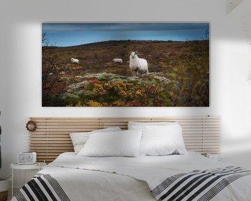 Schafe in der Herbstlandschaft