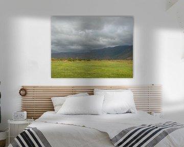 'Graslandschap', Tanzania sur Martine Joanne