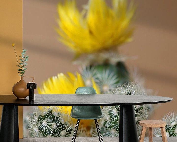 Beispiel fototapete: Kleiner Kaktus von Klaus-Dieter Schulze