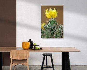 Kleiner Kaktus von Klaus-Dieter Schulze