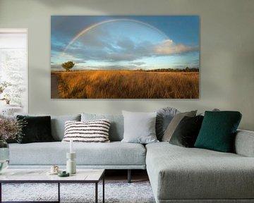 Regenboog boven Nederland van Jeffrey Van Zandbeek