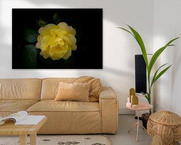 yellow rose van foto-fantasie foto-fantasie