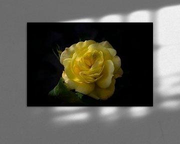 yellow beauty van foto-fantasie foto-fantasie