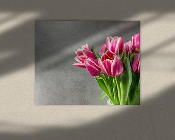 pink tulips on dark background