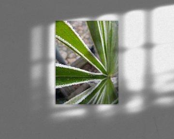 Bevroren palmboom van Froukje Hobma