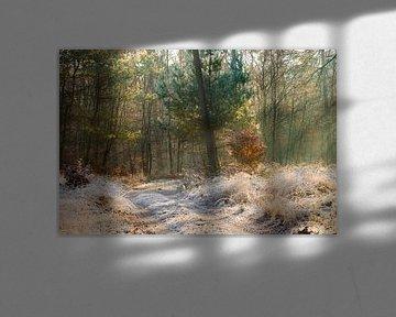 Zonnestralen in een bevroren bos op de Veluwe van Evert Jan Kip