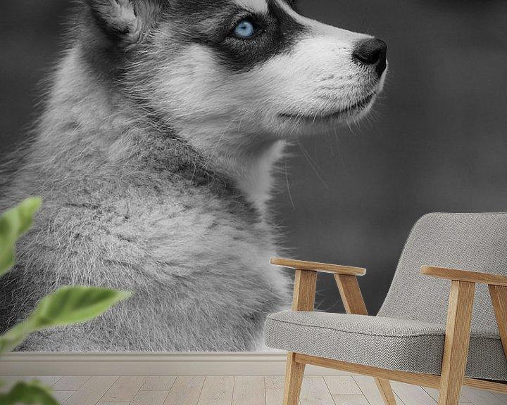 Beispiel fototapete: Husky  von Astrid Brouwers