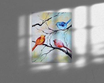 Oiseaux dans le jardin 4