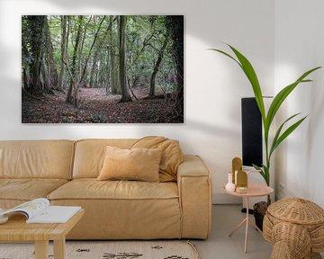 Sprookjesachtig bos van Ratna Bosch